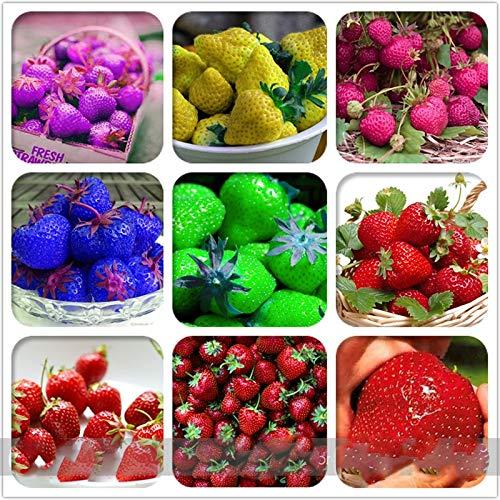 Erdbeeren - Weisse
