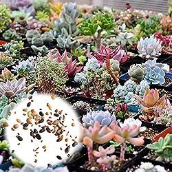 Semillas Rosepoem Ornamentales 400 Semillas de Plantas Suculentas