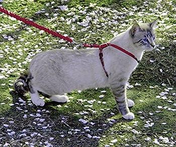 PetSafe Harnais pour chat et laisse Easy Walk, Petit - Rouge