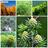 Portal Cool Color 2: 50Pcs Beautiful Daylily Flower Seeds Home Garden Bonsai Piante Fai Da Te Easy Wt88 01