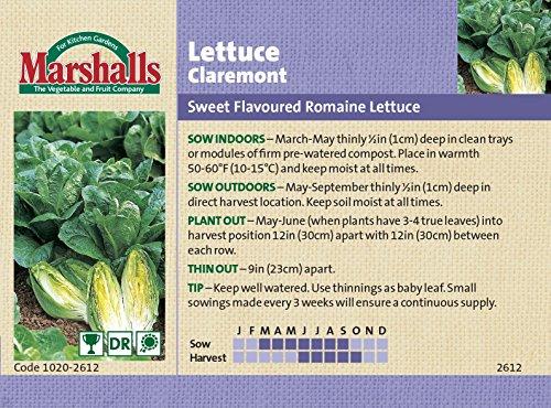 marshalls-seeds-vegetable-lettuce-claremont