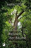 Die spirituelle Weisheit der Bäume: Eine Entdeckungsreise - Pierre Stutz