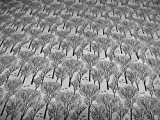 Jersey Bäume grau schwarz Baum filigran Meterware