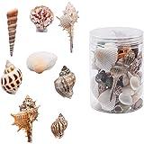 WANDIC Coquillages de mer, boîte de Perles de Coquillages de mer Naturelles Mixtes pour Bricolage, Fabrication de Bijoux, pen