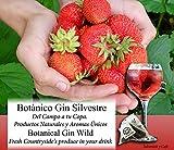 Saboreaté y Café The Flavour Shop Botánicos para Gin Tonic Especias Para Cócteles Ginebra Premium Kit Gift Set Gin Sabor Silvestre Aroma Natural Té Botanic - 24 Unidades