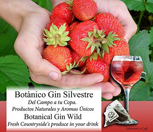 Saboreateycafe Botánicos 24 uds de Ginebra Premium Silvestre. Elaborado en pirámide para aromatizar tu cóctel Gin-Tonic. Té GinTonic 100% con aroma natural y orgánico. Set sabor a frutas en especias e infusiones.