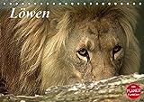 Löwen (Tischkalender 2018 DIN A5 quer): Der König im Tierreich (Geburtstagskalender, 14 Seiten ) (CALVENDO Tiere) [Kalender] [Apr 01, 2017] Klatt, Arno