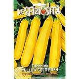 cylindrica Gold Rush Zucchina 5 semi Cucurbita pepo var SAFLAX BIO