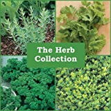 #4: Seedscare Rosemary, Celery, Parsley and Oregano Seeds Combo (Pack of 40+ Seeds each, 4 packet combo)
