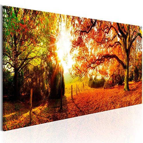 murando - Bilder Wald 135x45 cm Vlies Leinwandbild 1 TLG Kunstdruck modern Wandbilder XXL Wanddekoration Design Wand Bild - Waldlandschaft Natur Panorama Baum Herbst Baum Sonne c-B-0244-b-a