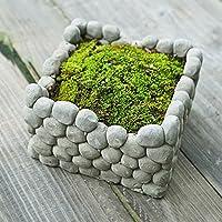Bluelover Breathab piazza pietra Earthen Pot succulenti piante Flowerpot casa giardino di paesaggio decorazione