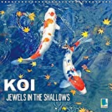 Koi Jewels In The Shallows (Wall Calendar 2017 300 × 300 mm Square) (Calvendo Animals)