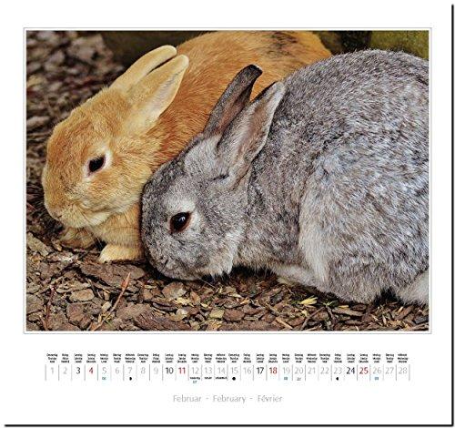 KANINCHEN: Original Stürtz-Kalender 2018 – Mittelformat-Kalender 33 x 31 cm - 4