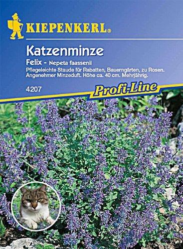 Nepeta fassenii Katzenminze Felix blau