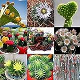 Soteer Garten - 100 stück Kaktus Samen mixed Sukkulenten Samen Mischung Bonsai Hausgarten Balkon Dekoration Winterhart Mehrjährig