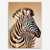 !!! SENSATIONSPREIS !!! ge Bildet® hochwertiges Leinwandbild - Close-up Portrait von ein Baby Zebra im Etosha Nationalpark - Namibia - 30 x 20 cm einteilig | angebote der woche geschenke für frauen geschenke für männer |