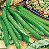 Broad Bean - Bunyards Exhibition - 60 Seeds