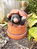 Mole in Flower Pot Garden Ornament - Resin