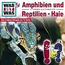 Amphibien und Reptilien + Haie