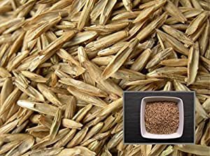 Ray Grass Anglais Prenium - 40 grammes - Lolium Perenne L. - Perennial Rye-Grass - (Engrais vert - Green manure)