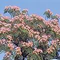 Seidenbaum - 1 baum von Meingartenshop auf Du und dein Garten