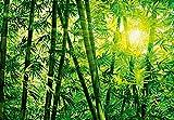 Idealdecor 123 Bamboo Forest, 366 x 254 cm