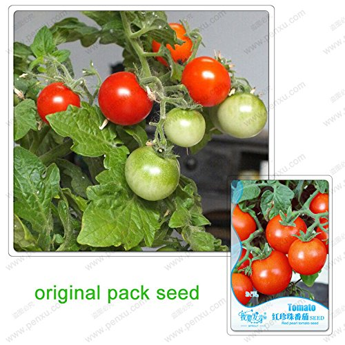 25 graines / Pack, graines de perle rouge chaud tomate cerise nain bonsaïs en pot d'excellents légumes windowsill