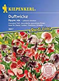 Kiepenkerl Lathyrus odoratus (Edelwicken) Ripple Mix