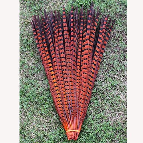10 Wurzel schöne Fasan Feder mehrfarbig Handarbeit Ornamente Feder 30-35cm
