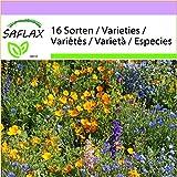 SAFLAX - Pradera de montaña - 1000 semillas - 16 Sorten