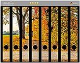 Wallario Ordnerrücken Sticker Herbstlicher Waldweg mit Buntem Laub in Premiumqualität - Größe 8 x 3,5 x 30 cm, passend für 8 Schmale Ordnerrücken