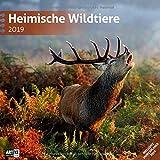 Heimische Wildtiere 2019, Wandkalender / Broschürenkalender im Hochformat (aufgeklappt 30x60 cm) - Kalender mit Monatskalendarium zum Eintragen