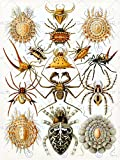 NATURE ART ERNST HAECKEL SPIDER ARACHNID BIOLOGY GERMANY VINTAGE POSTER 874PY
