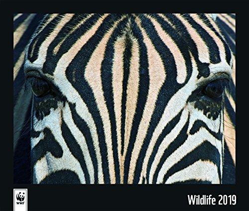 WWF Wildlife 2019 - Naturkalender, Tierkalender  -  46 x 39