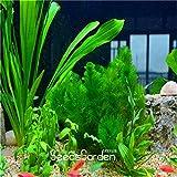 Promotion! 10pcs Jardin des plantes / mousse graines de plantes aquatiques, les graines d'herbe aquarium Bonsai, # PDPOK0 sessiliflora Lot Limnophila