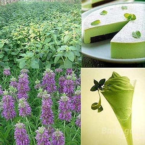 mark8shop 40Parfum Menthe Vanille à herbe à chat Home Garden Graines de plantes