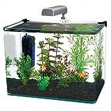 Penn-Plax angolare in vetro curvo acquario kit, 10-gallon