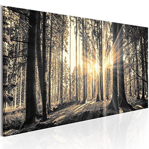murando Bilder Wald c-B-0077-b-c