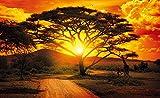 Olimpia Design Fototapete Photomural Afrika, 1 Stück, 400P8