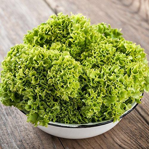 Salat Lollo Bionda samen - Lactuca sativa - 1200 samen