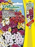 Elfenspiegel 'Triumph Mischung' farbenprächtig, auch für Topfkultur, kompakt wachsend ( mit Stecketikett) 'Nemesia strumosa'