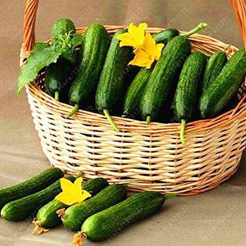 mymotto 20/50/100 Pcs graines par paquet Graines de légumes Graines de concombre Melon et fruits (50 PCS)