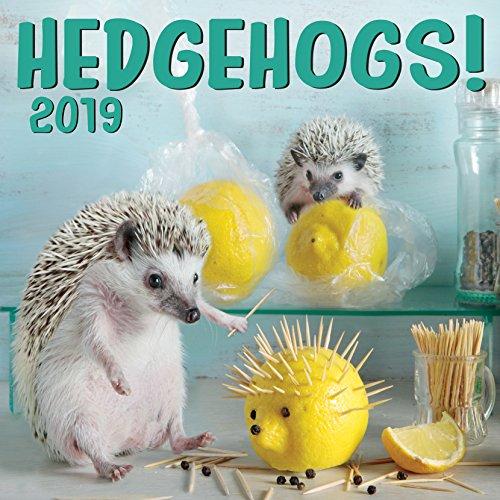 Cal 2019 Hedgehogs