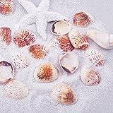 ROSENICE Muschel Perlen mit Loch Deko Muscheln zum Basteln für DIY Handwerk Schmuckherstellung 50 Stücke - 3