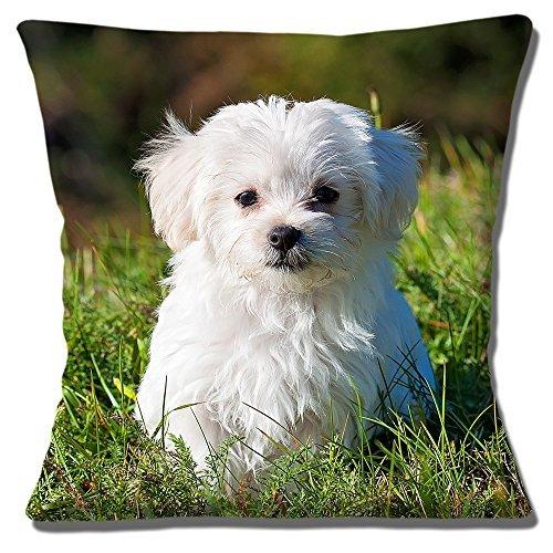 Cute Bichon Frisé Puppy Hund Foto grün weiß getrimmt–40,6cm (40cm) Kissenbezug,