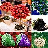 100 Stück Erdbeer Samen Klettererdbeeren Garten Obst Pflanze Erdbeerbäumchen Blau