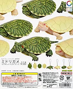 Kitan Club 300 yen Gacha Nature Technicolor MONO Green turtle strap x Magnet (japan import)