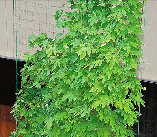 Kingt rellis filet de jardin pour plantes grimpantes concombre tomate pois lourd maille 10 cm (3x4 m)