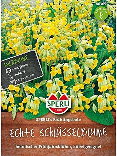 Primula veris Echte Schlüsselblume Frühlingsbote