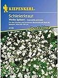 Gypsophila paniculata Schleierkraut Weisse Spitzen